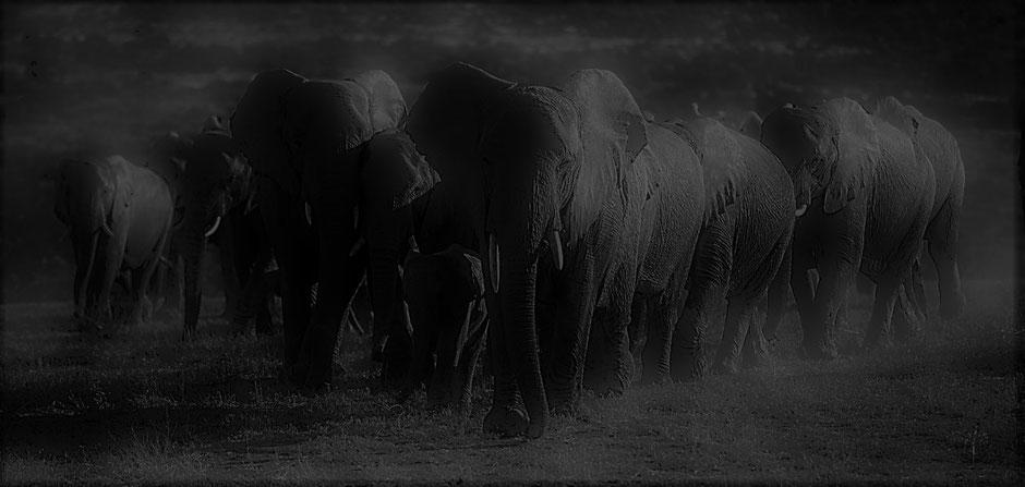 Kenia Safari Reiseblog