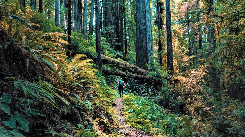 Redwood National Park Hotels und Lodges