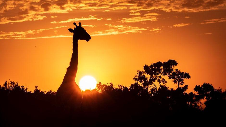 Afrika Safari Erfahrungen Absacker im Feuerschein