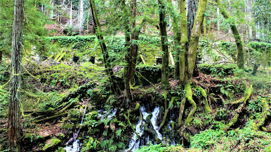 Redwood National Park Aktivitäten