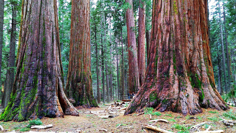 Hotels Sequoia-Nationalpark: Anreise Lage Route