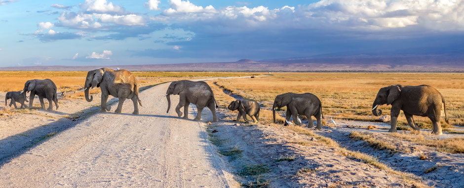 Amboseli Nationalpark Safari