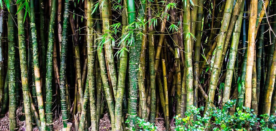 Cairns Sehenswürdigkeiten Botanic Gardens