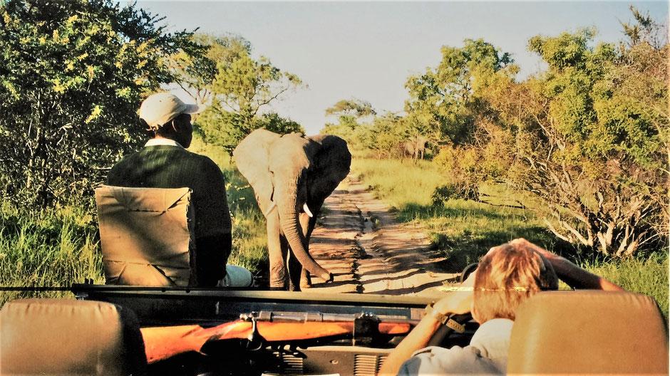 Afrika Safari Erfahrungen Ranger und Tracker beim Game Drive