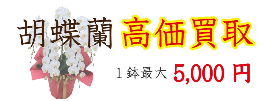 胡蝶蘭を高価買取、1鉢最大5,000円にて買取
