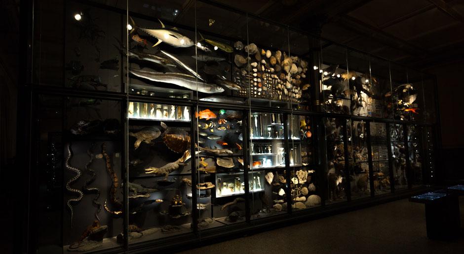Januar 16, Naturkundemuseum Berlin