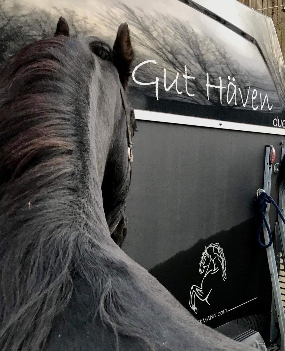 Böckmann Pferdeanhänger, Gut Häven