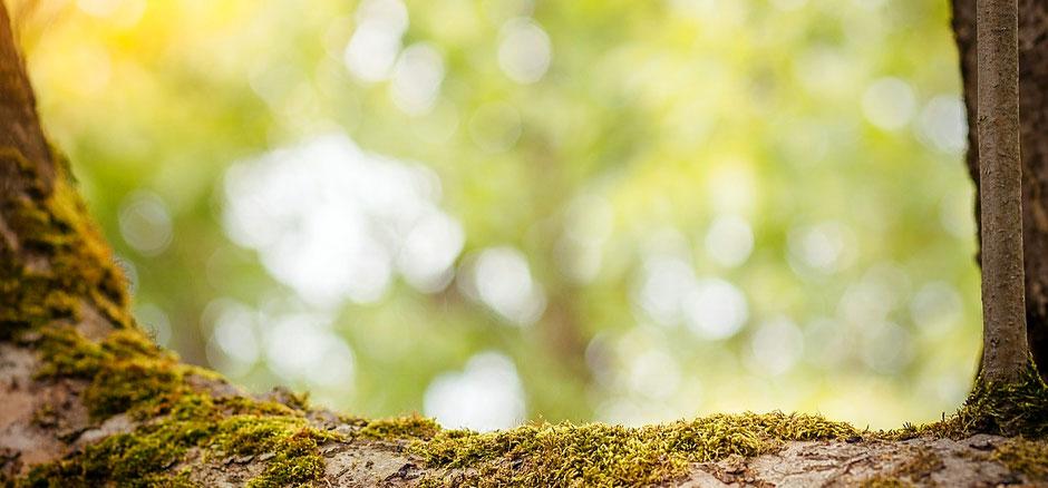 erste Hilfe bei Stress, was tun gegen Stress im Alltag, Naturheilpraxis Norma Bendt - Dein Blog für Gesundheit & Wohlbefinden, craniowellen