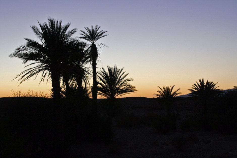 Palmen im Abendlicht in Marokko