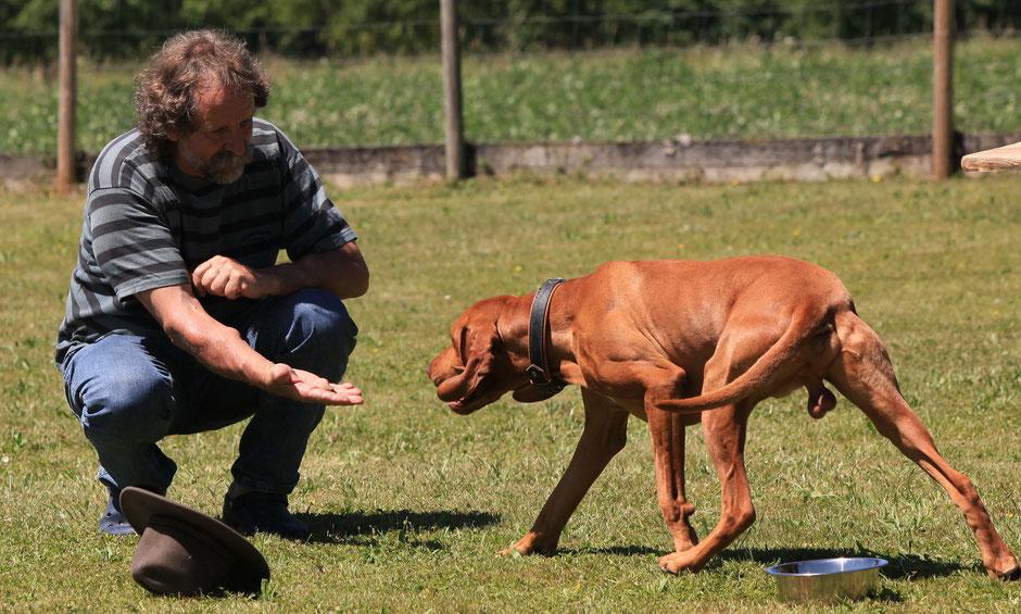 """Hocke heisst für den Hund: """"Wenn ich herankomme dann krieg ich Futter"""""""
