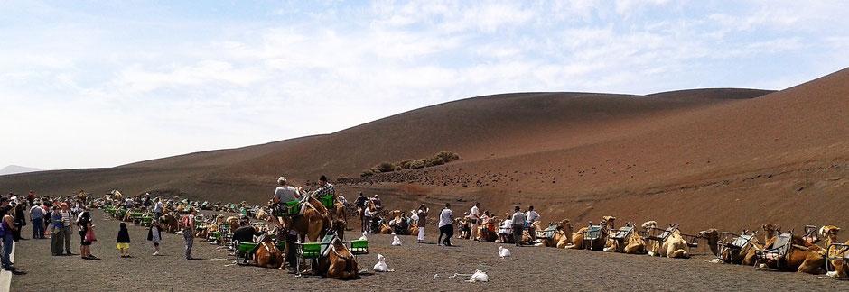 Auf Lanzarote Kamelreiten für Touristen