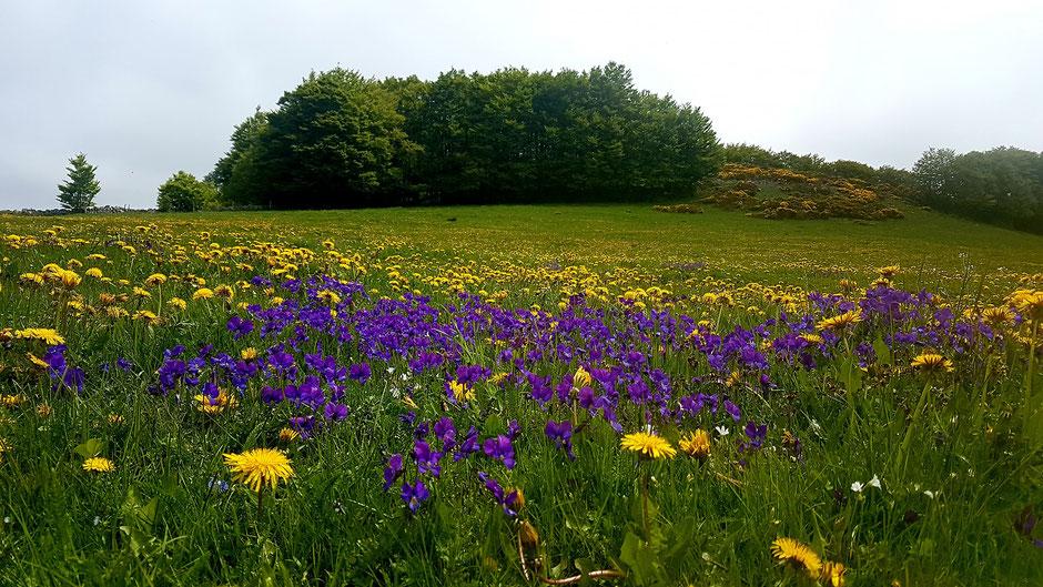 La célèbre Foire des violettes (aussi appelée Fête des Violettes) est organisée chaque année le dimanche après le 12 juillet dans le village de Sainte-Eulalie