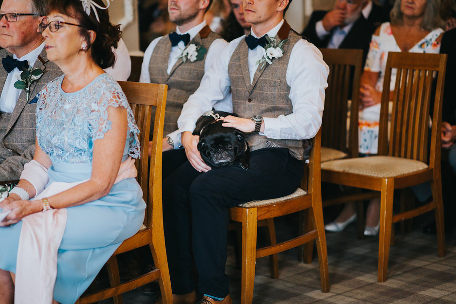 a black pug sat on a groomsmans knee during a wedding ceremony