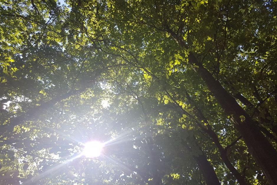 Ein Waldbaden Kurs und intuitiver Baumkontakt reduzieren Stress und erden mit sich und der Natur
