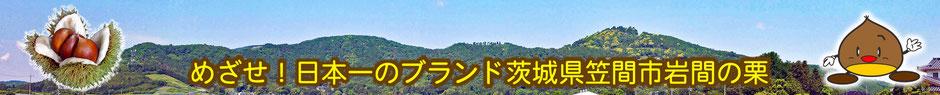 めざせ!日本一のブランド 茨城県笠間市岩間の栗