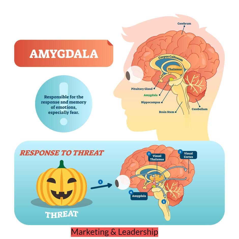 Amigdala - come è fatto il cervello emotivo