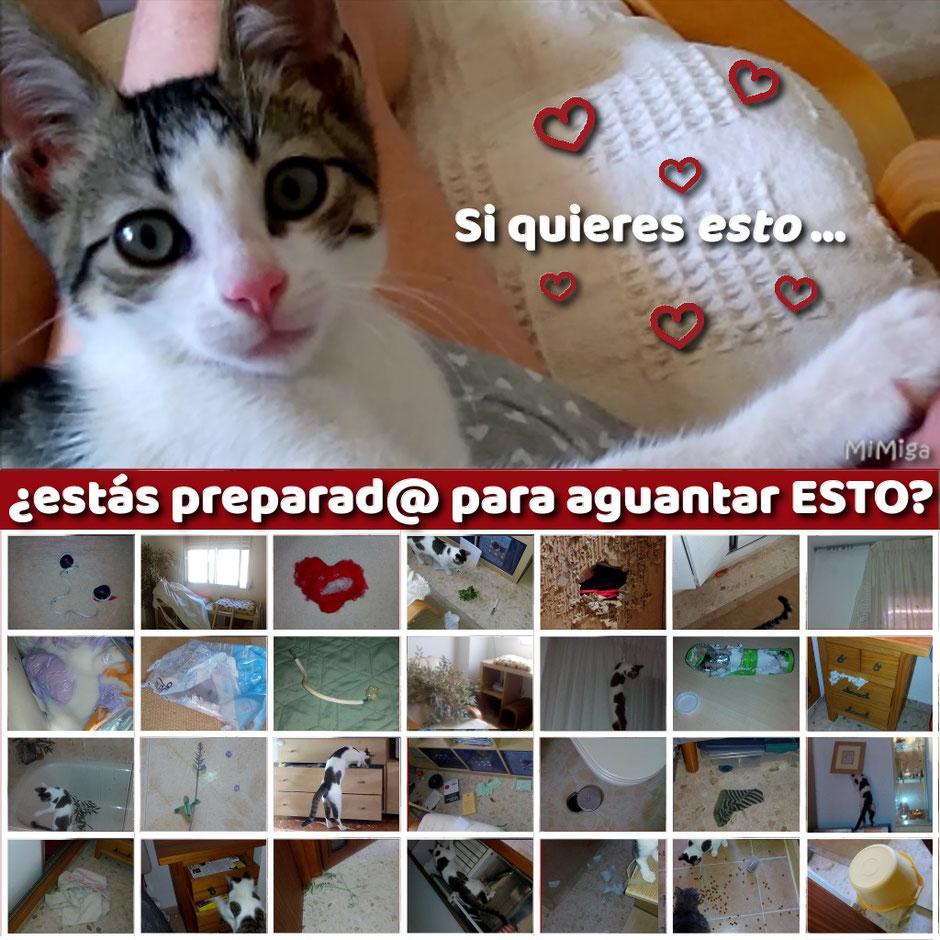 lo que debes saber si quieres un gatito