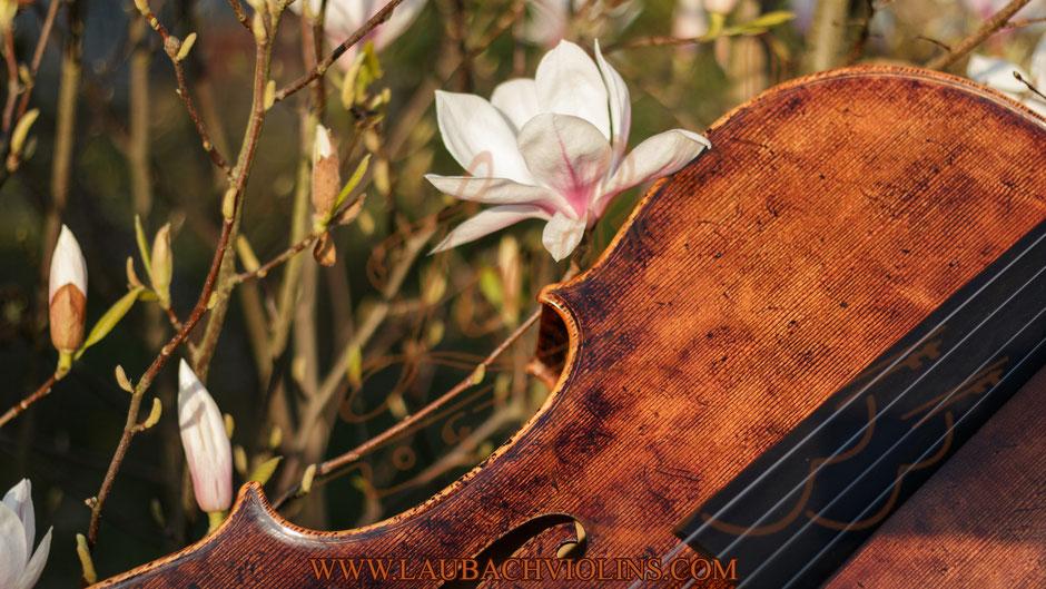 Beste Laubach antike  Master Cellos Hergestellt in Deutschland
