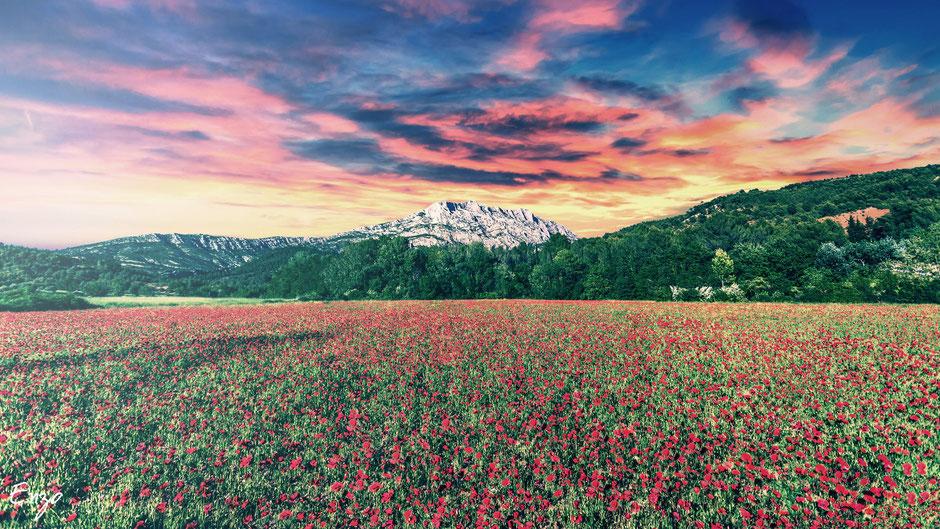 Photographie Champs de coquelicot au pied de la sainte victoire à Aix-en-provence
