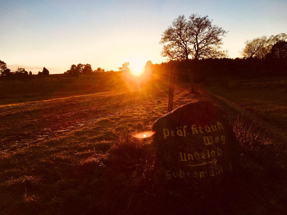 Wilseder Heide bei Undeloh // Foto ©Nicole Hacke