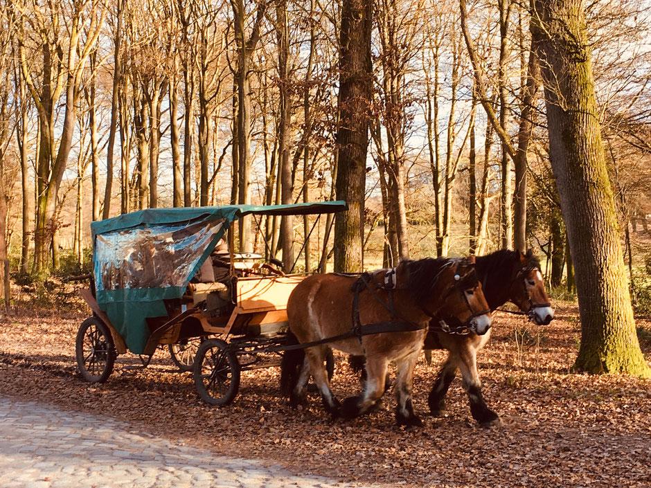 Kutschenfahrt nach Wilsede // Foto ©Nicole Hacke