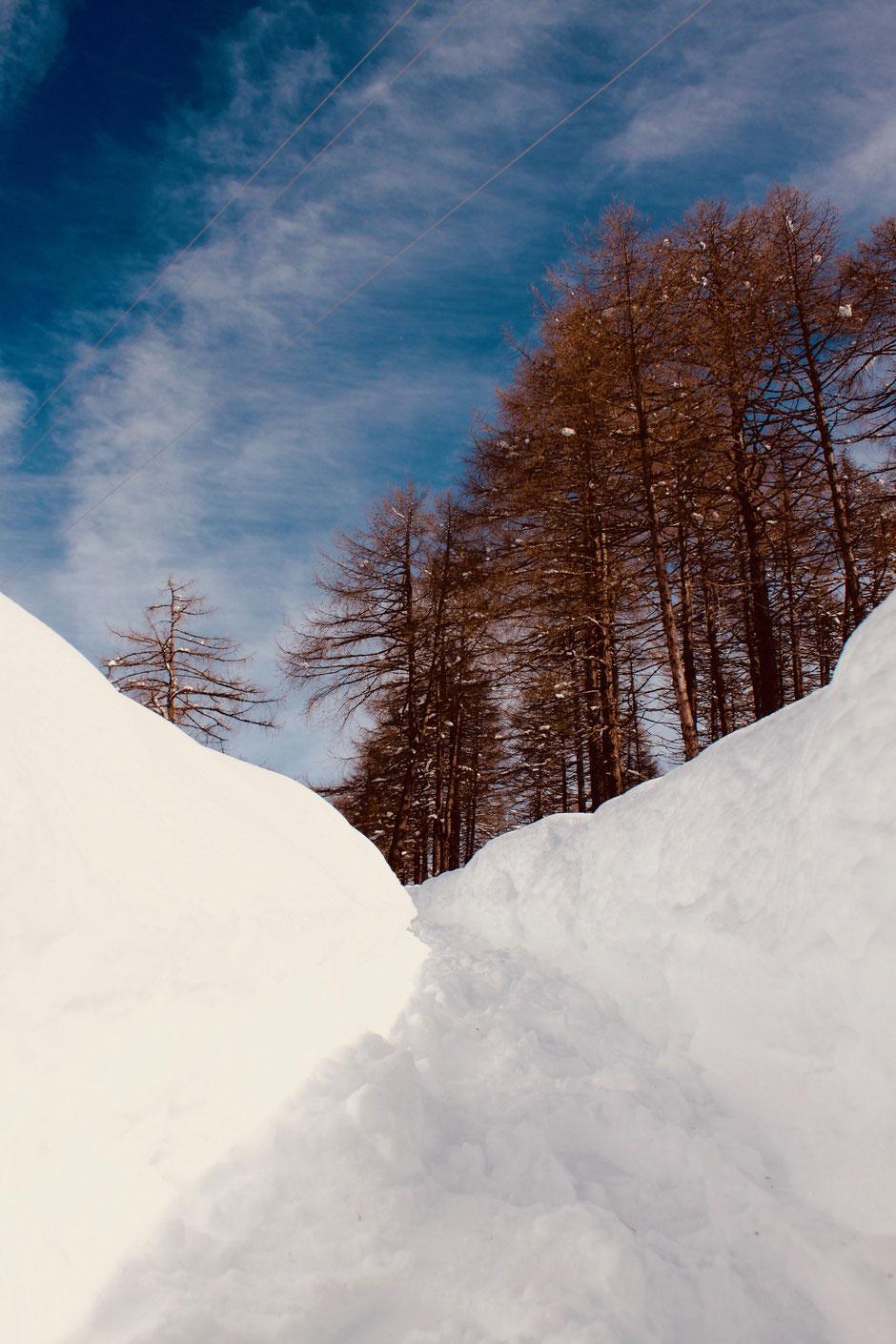 Schneeschuhwandern in Hafling bei Meran / Südtirol