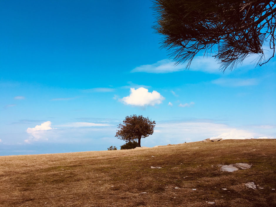 Wanderweg oberhalb des Dorfes Megalo Kasaviti