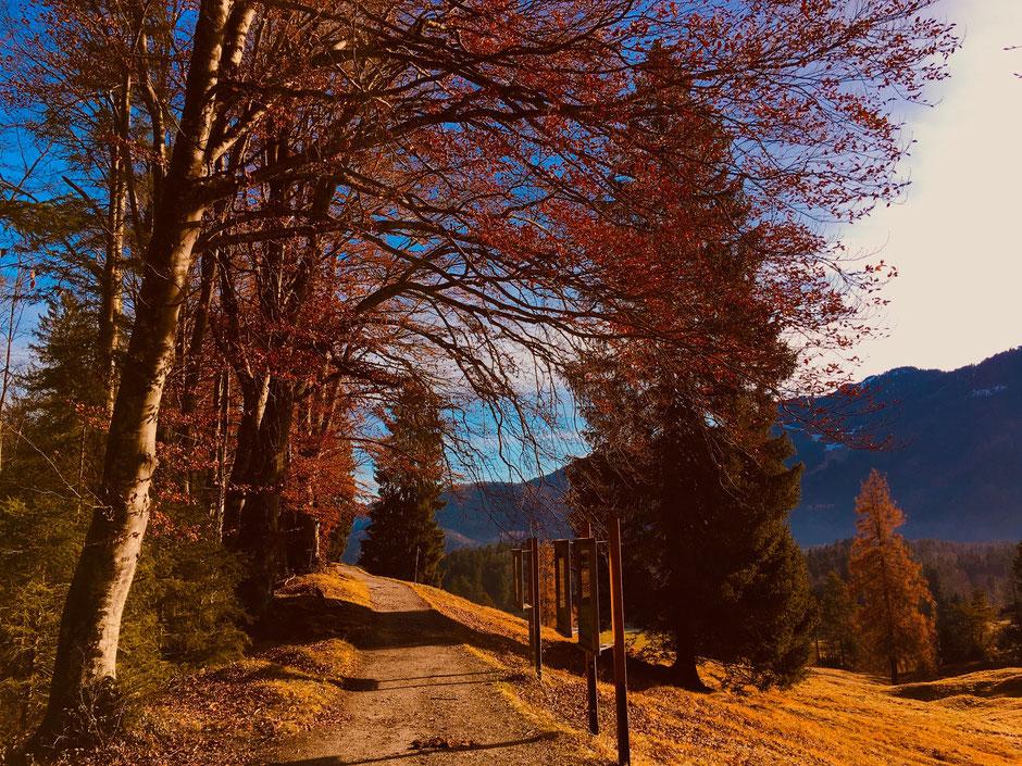 Der Höhenrainweg oberhalb von Grainau