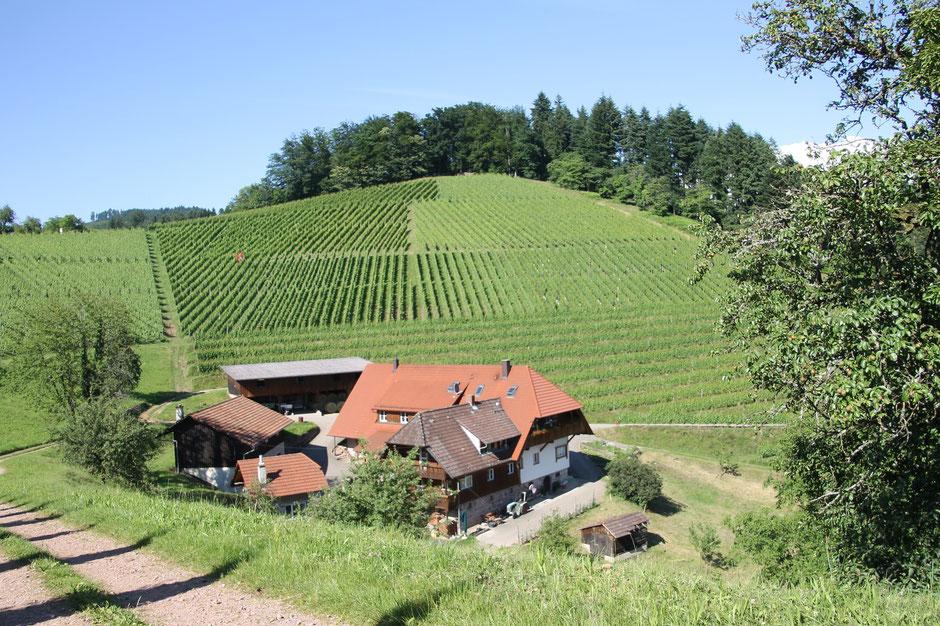 Die Lage ist traumhaft. Selbst Einheimische sind neidisch. Blick auf den Winzerhof Armbruster und die Ferienwohnung in Gengenbach.