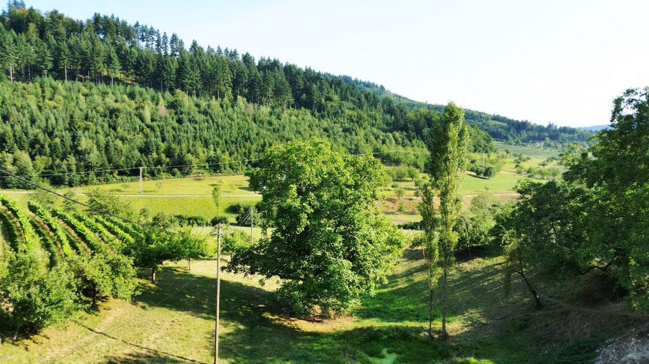 Die Region im Schwarzwald ist traumhaft. Auf dem Bild sehen Sie den Ausblick aus der Ferienwohnung in Gengenbach.