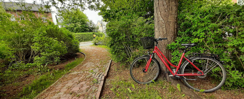 Bycicle in Nature