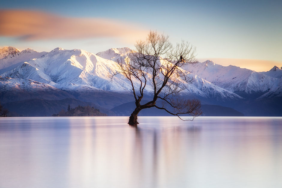 Lone Willow Tree of Wanaka. New Zealand Photography Workshop