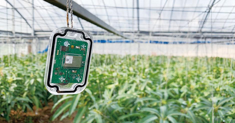 実際にマンゴー農家で農業IoT「てるちゃん」を使っている様子