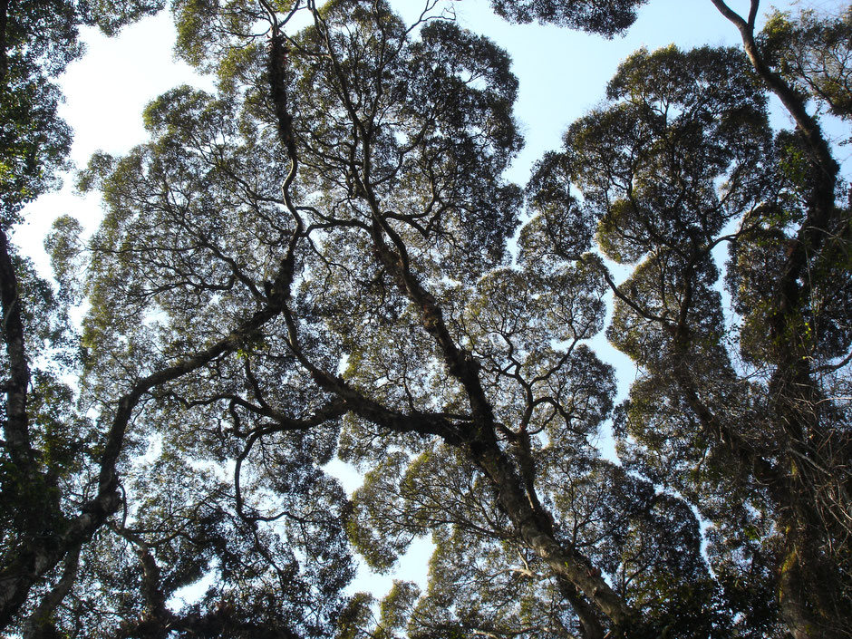 Einführung Ökologie Mandelbrot Mathematik