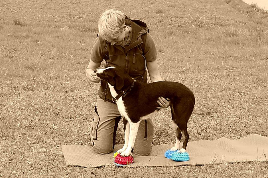Laura Klingseisen-Bruun und Hund bei Physiotherapie auf Igelkissen Koordinationsschulung