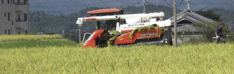 米作りの流れ イメージ画像