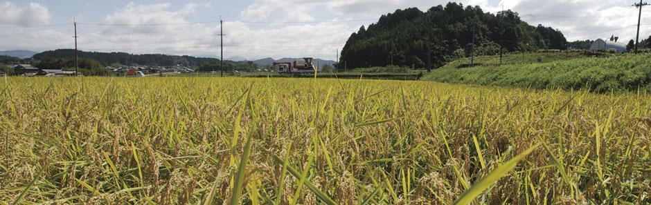 農業事業部 イメージ画像
