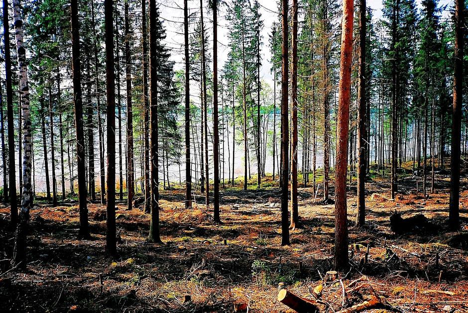 Frühling Wald See Finnland