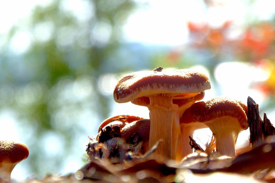Pilze sammeln See Wald Finnland