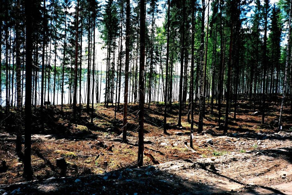 Wald See Finnland Frühling