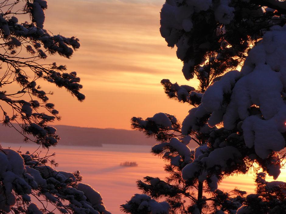 Schnee Bäume am See Winter Finnland