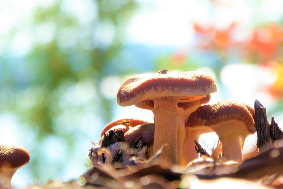 Pilze sammeln am Wald und See Sunny Mökki Sysmä
