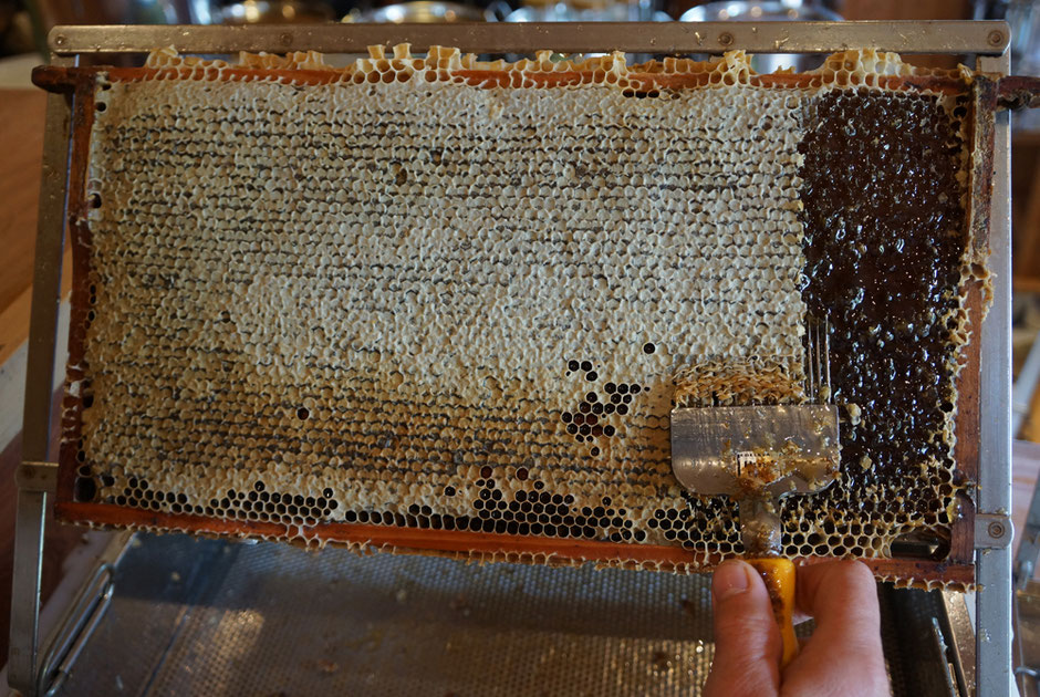 Wabe voll mit Honig