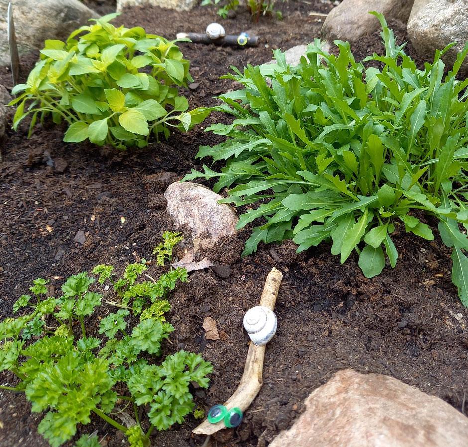 Basteln Holz Garten Schnecken Beet