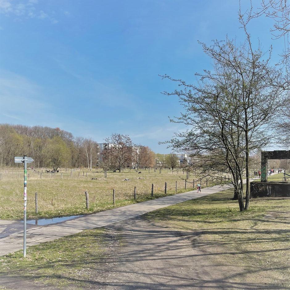 Park Landschaftspark Herzberge Stadtbezirk Berlin-Lichtenberg Wiese