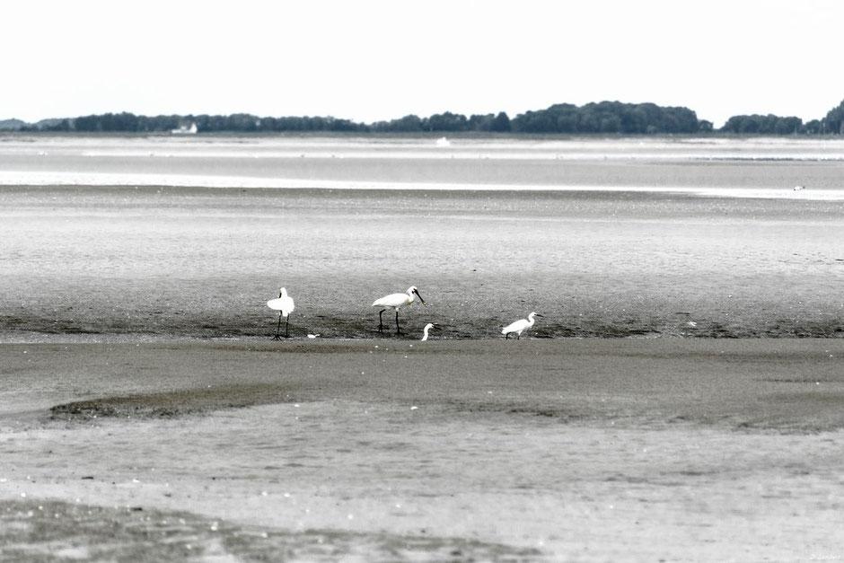 Baie Som D7-16_049RB