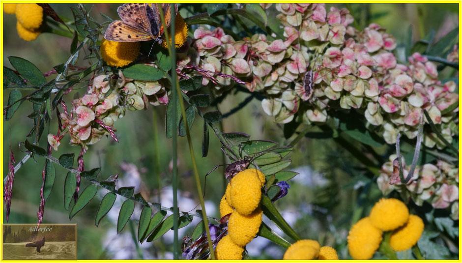 menschundnatur-unserezukunft, Schmetterlinge, Insekte