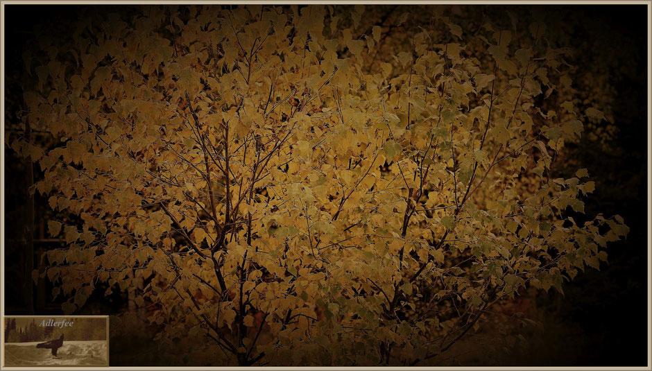 menschundnatur-unserezukunft, birke, pflanzen