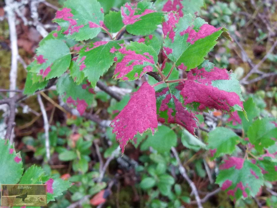 menschundnatur-unserezukunft, natur, pflanzen,birke