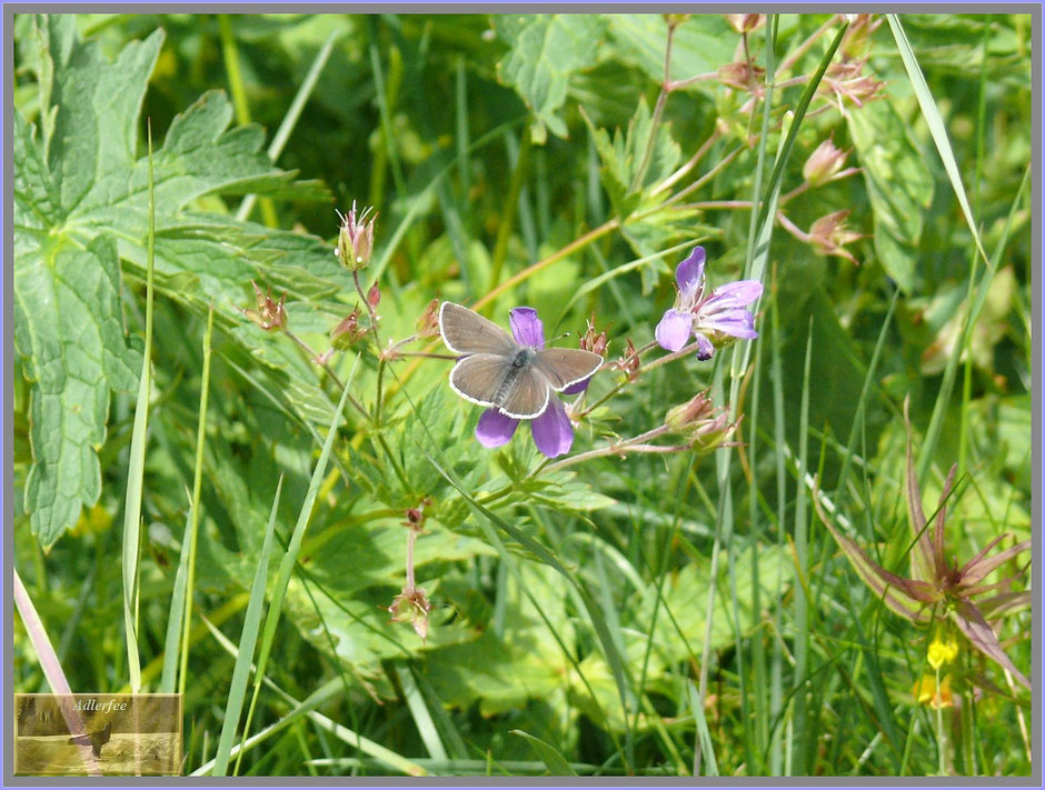 Schmetterlinge, Insekten, menschundnatur-unserezukunft